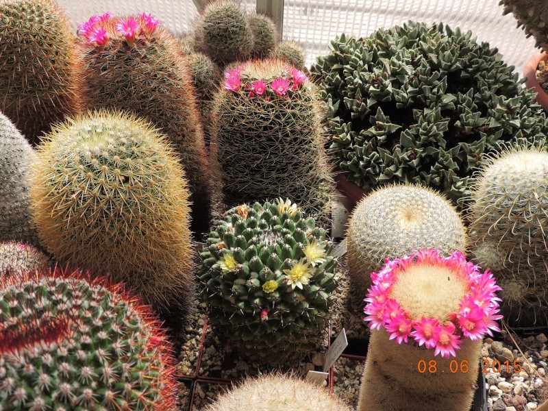Cacti and Sukkulent in Köln, every day new flowers in the greenhouse Part 128 Bild_479