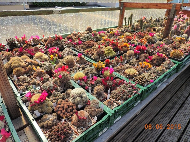 Cacti and Sukkulent in Köln, every day new flowers in the greenhouse Part 128 Bild_523