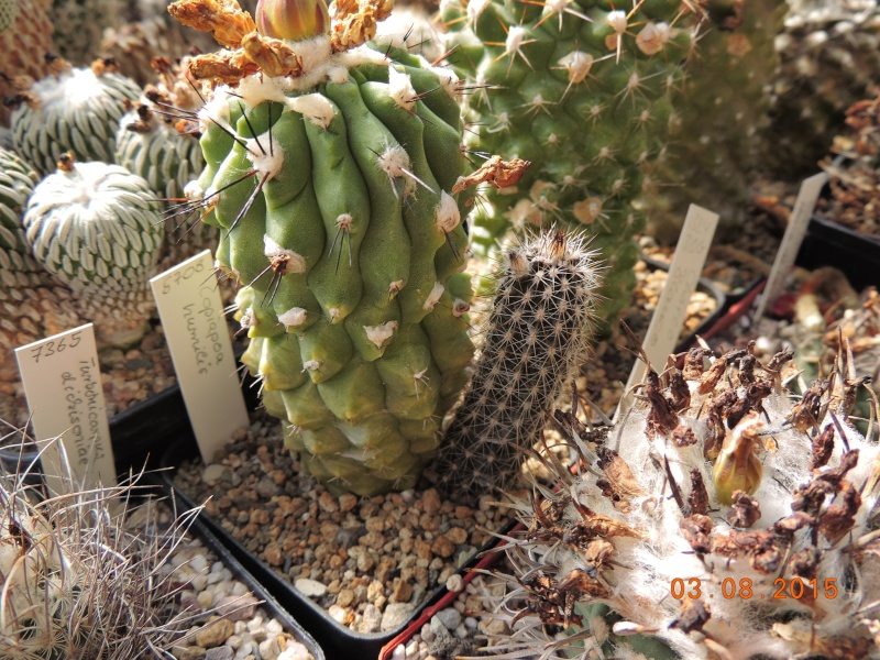 Cacti and Sukkulent in Köln, every day new flowers in the greenhouse Part 129 Bild_585