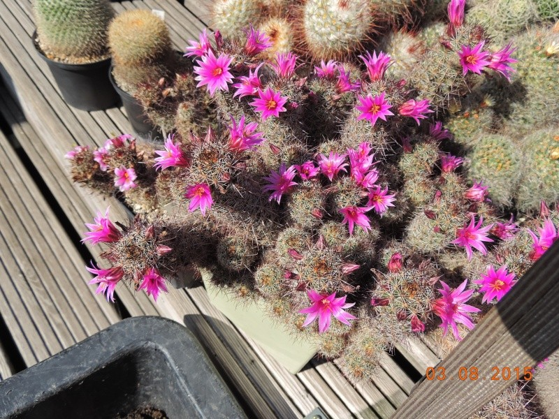 Cacti and Sukkulent in Köln, every day new flowers in the greenhouse Part 129 Bild_596