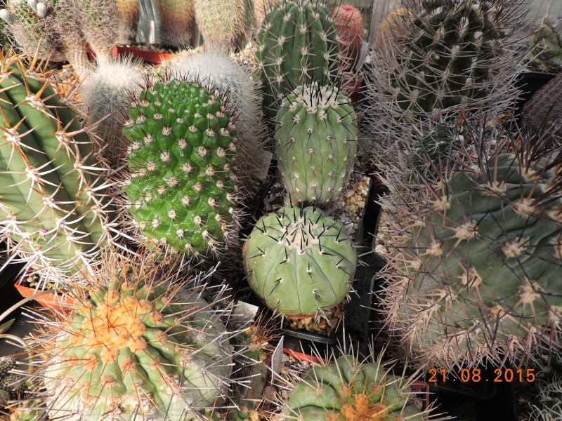 Cacti and Sukkulent in Köln, every day new flowers in the greenhouse Part 129 Bild_668