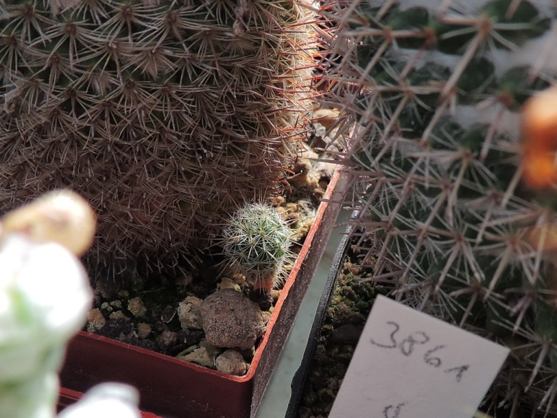 Cacti and Sukkulent in Köln, every day new flowers in the greenhouse Part 129 Bild_676
