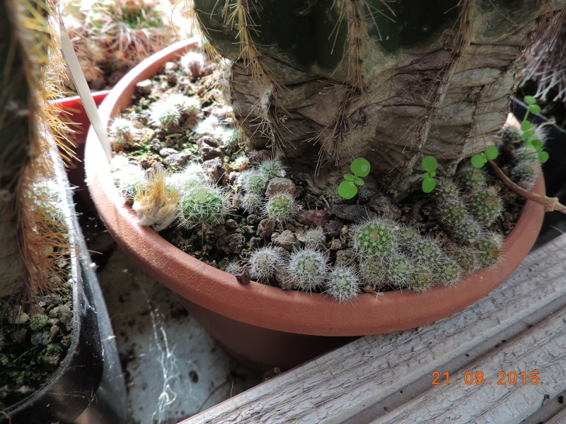 Cacti and Sukkulent in Köln, every day new flowers in the greenhouse Part 129 Bild_677