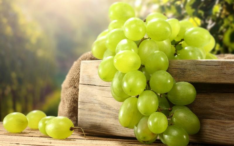 GIRO DEL LAGO D'ISEO E OASI IN FRANCIACORTA 4° EDIZIONE TOP EVENT ! Grapes10