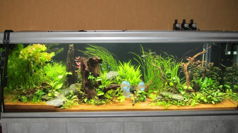 Création nouvel Aquarium amazonien 830 litres  - Page 12 Img_4810
