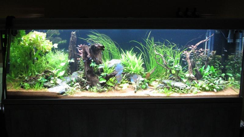 Création nouvel Aquarium amazonien 830 litres  - Page 12 Img_4811