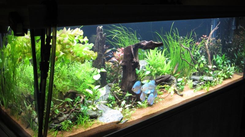 Création nouvel Aquarium amazonien 830 litres  - Page 12 Img_4812