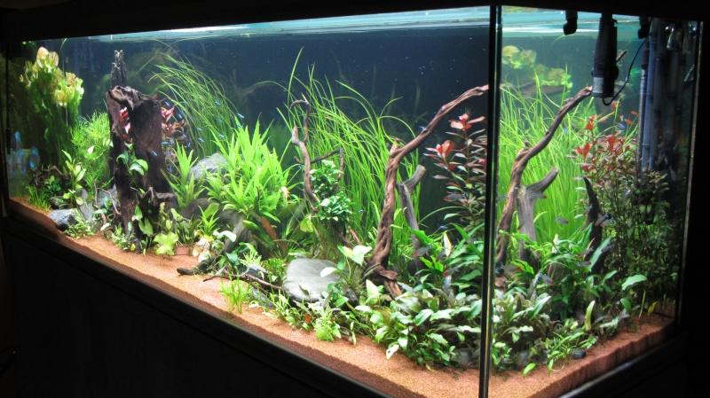 Création nouvel Aquarium amazonien 830 litres  - Page 12 Img_4813