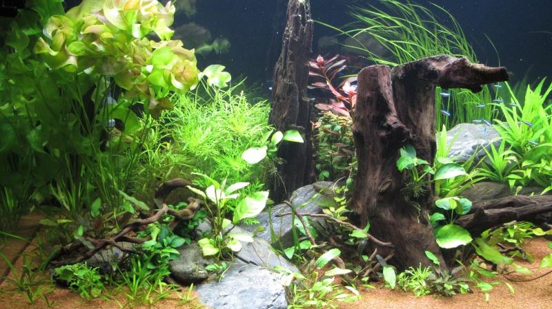 Création nouvel Aquarium amazonien 830 litres  - Page 12 Img_4814