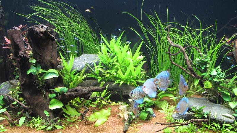 Création nouvel Aquarium amazonien 830 litres  - Page 12 Img_4815