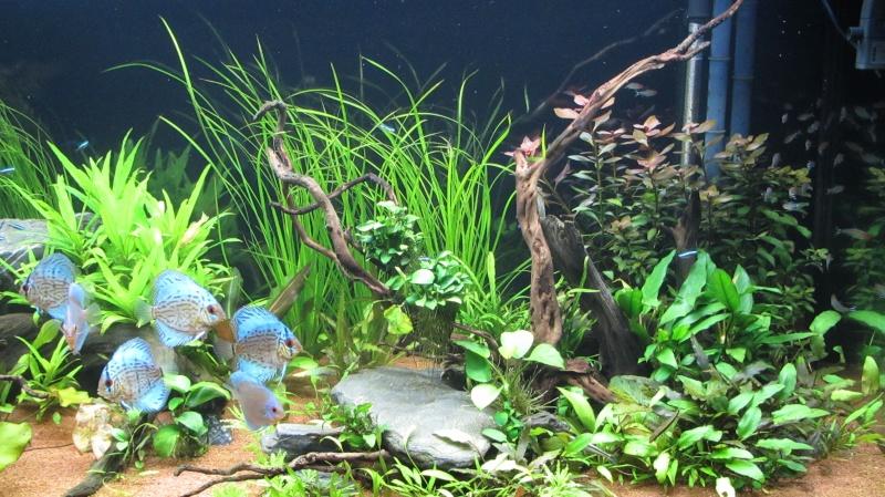 Création nouvel Aquarium amazonien 830 litres  - Page 12 Img_4816