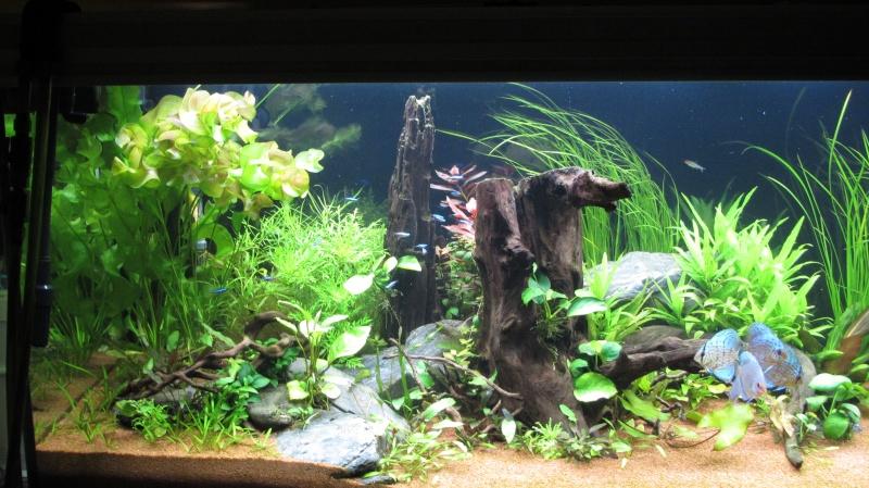 Création nouvel Aquarium amazonien 830 litres  - Page 12 Img_4817