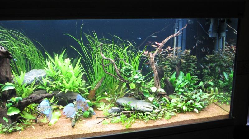 Création nouvel Aquarium amazonien 830 litres  - Page 12 Img_4818