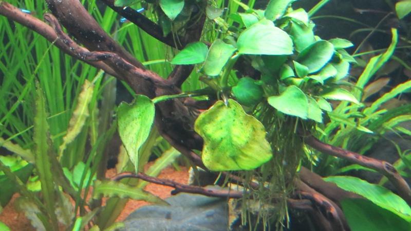 Création nouvel Aquarium amazonien 830 litres  - Page 12 Img_4822