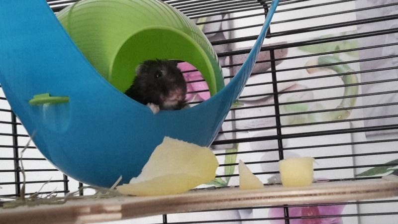 Hamster russe ou hamster Campbell? Image18