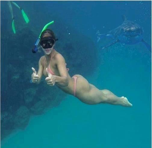 VapeDePartoutMemeEnEgypte est en vacance - Page 3 Shark_10