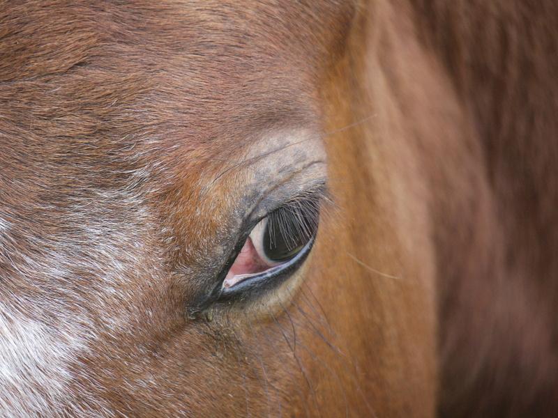 T'as de beaux yeux !! P1260312