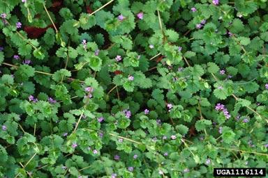 12 herbes médicinales à connaître absolument 11161110