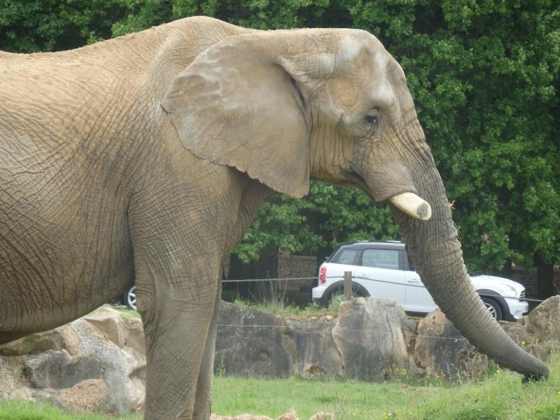 Visite au Zoo de Thoiry dans le 78 P5150310