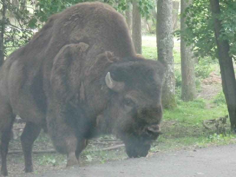 Visite au Zoo de Thoiry dans le 78 P5150410