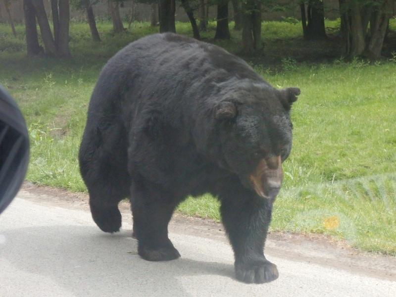 Visite au Zoo de Thoiry dans le 78 P5150411