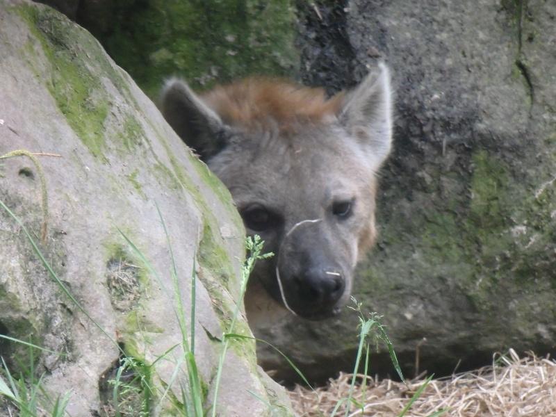 Visite au Zoo de Thoiry dans le 78 P5150412