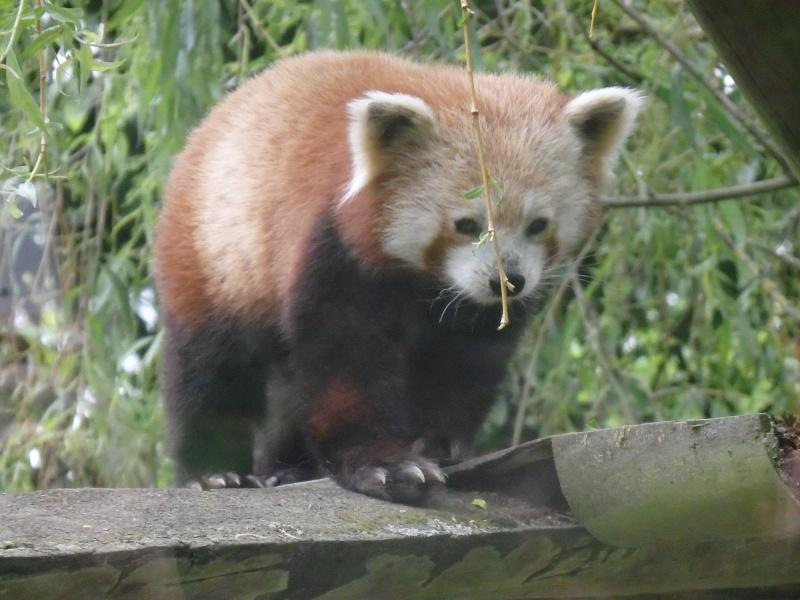 Visite au Zoo de Thoiry dans le 78 P5150413