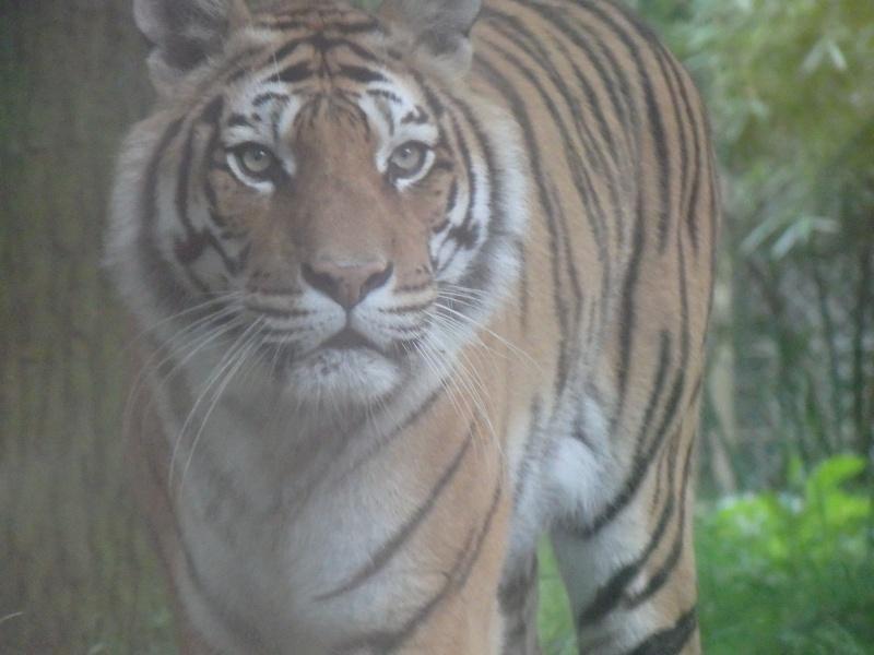 Visite au Zoo de Thoiry dans le 78 P5150610