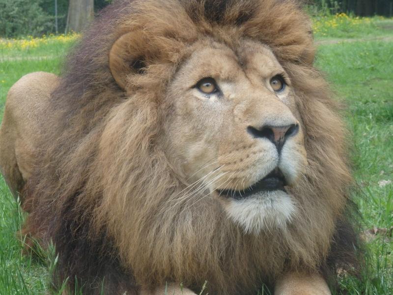 Visite au Zoo de Thoiry dans le 78 P5150611