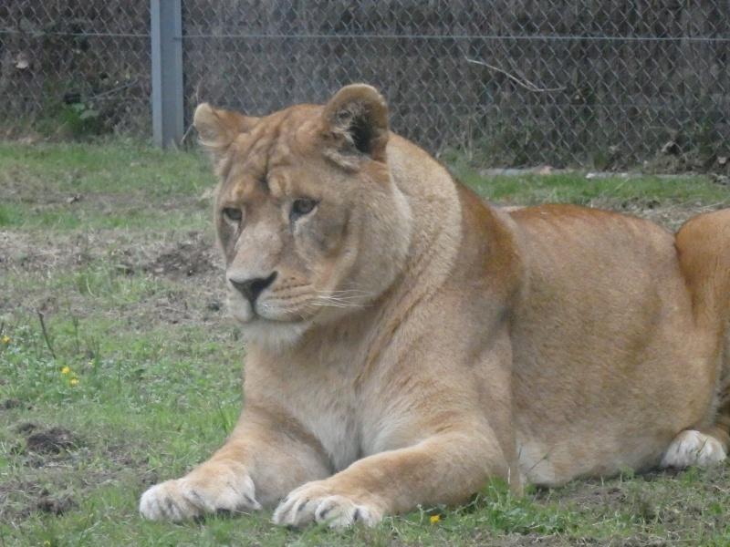 Visite au Zoo de Thoiry dans le 78 P5150612