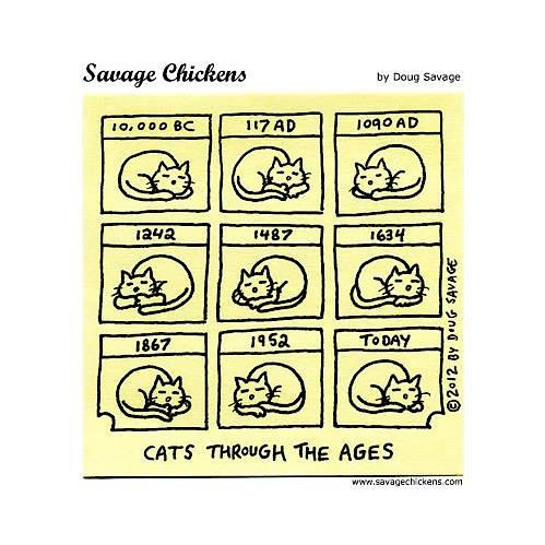 Miau... - Seite 4 11880310