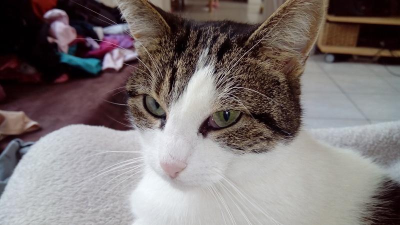 La miss Pépite, petit gabarit née en mars 2011 (Adoptée) - Page 3 Img_2010