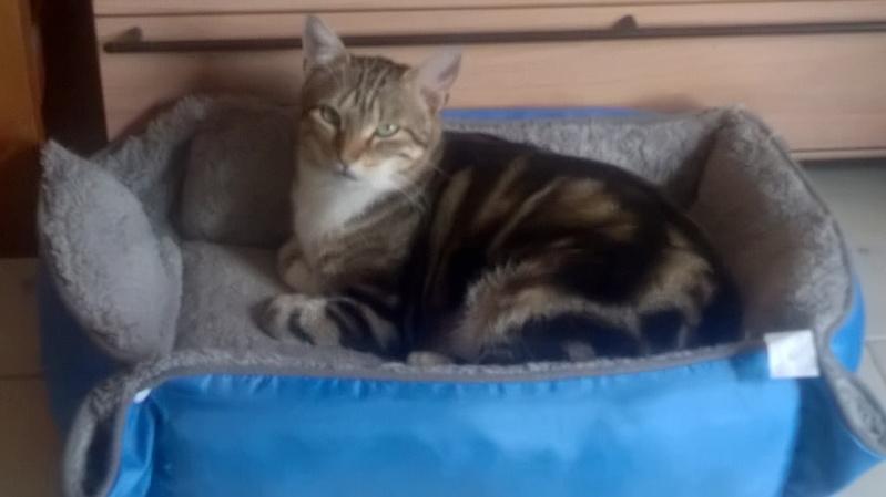 Ilios chat né en septembre 2012  - Page 2 Wp_20110