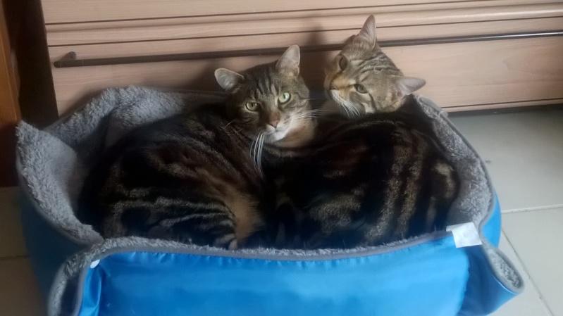 Ilios chat né en septembre 2012  - Page 2 Wp_20111