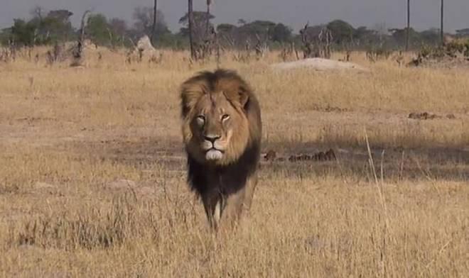 Luani simbol i Zimbavesë vritet nga një turist Luan310