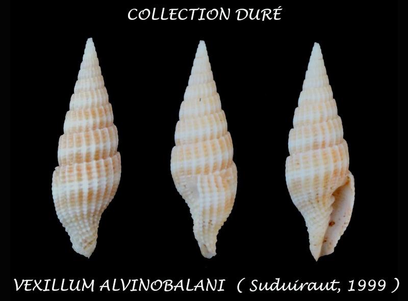 Vexillum alvinobalani - Guillot de Suduiraut, 1999  Panor186