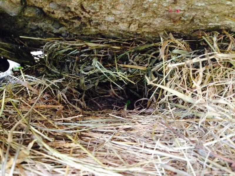 Hibernation d'une ah :) Image25