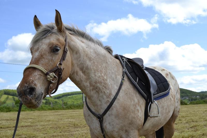 Le cheval toiletté _dsc0810