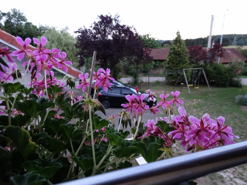 Concours photos numéro 43  La bravo(a) et les fleurs .   Dsc00010