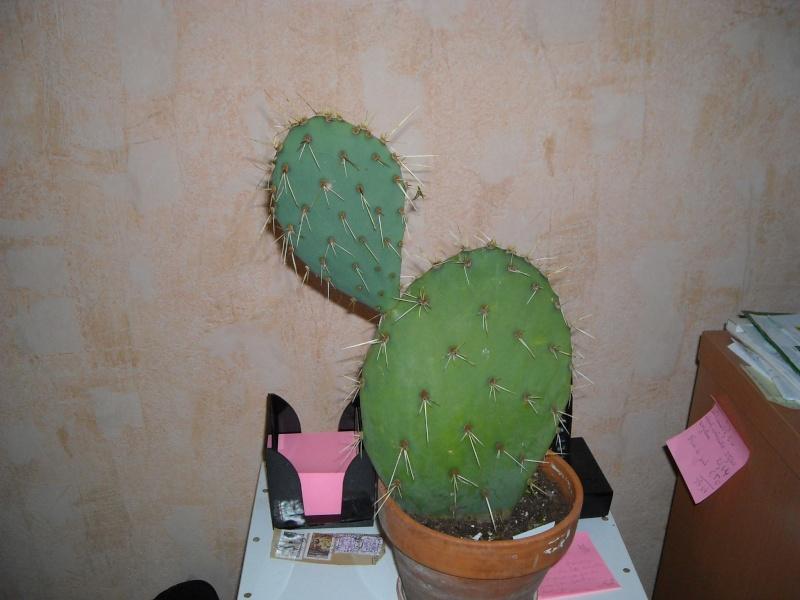 cactus de boyome Poupye10