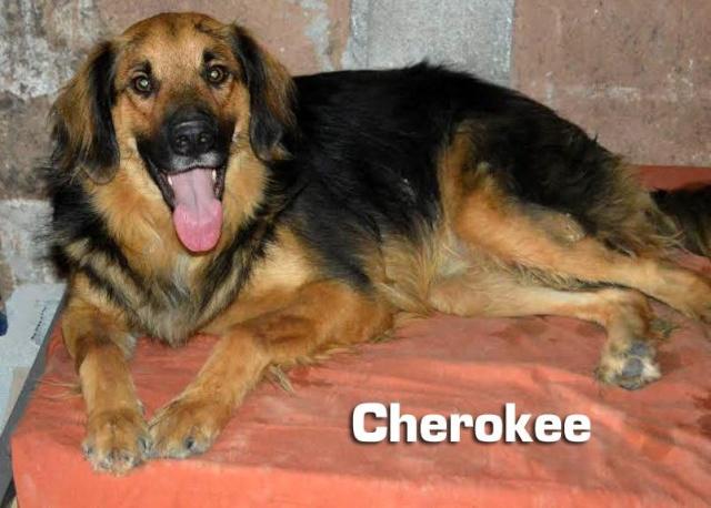 AU - Cherokee 10982510