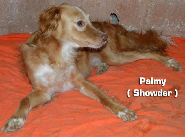 AU - Palmy 11813410
