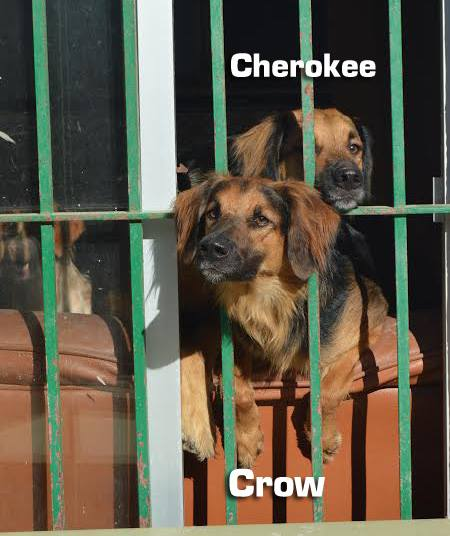 AU - Cherokee 11825911