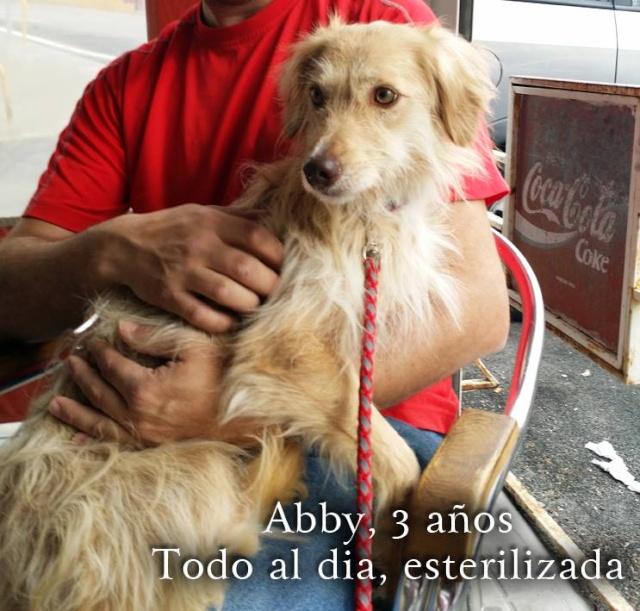 AU - Abby Abby10