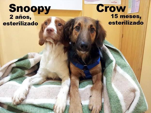 AU - Crow  Snoopy10