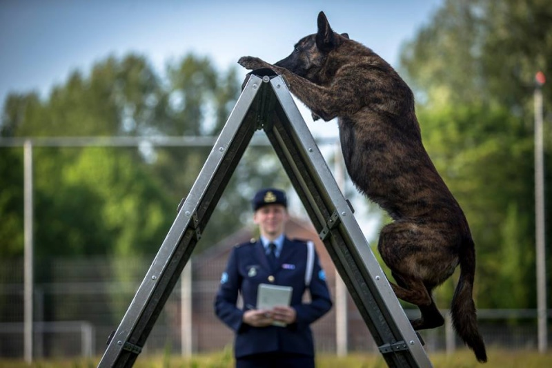 Animaux soldats - Page 5 1217