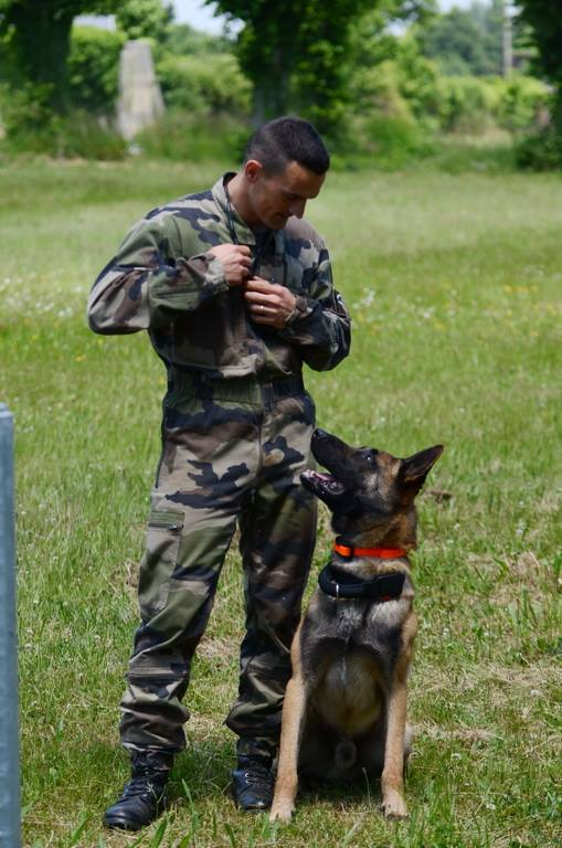 Animaux soldats - Page 5 1423