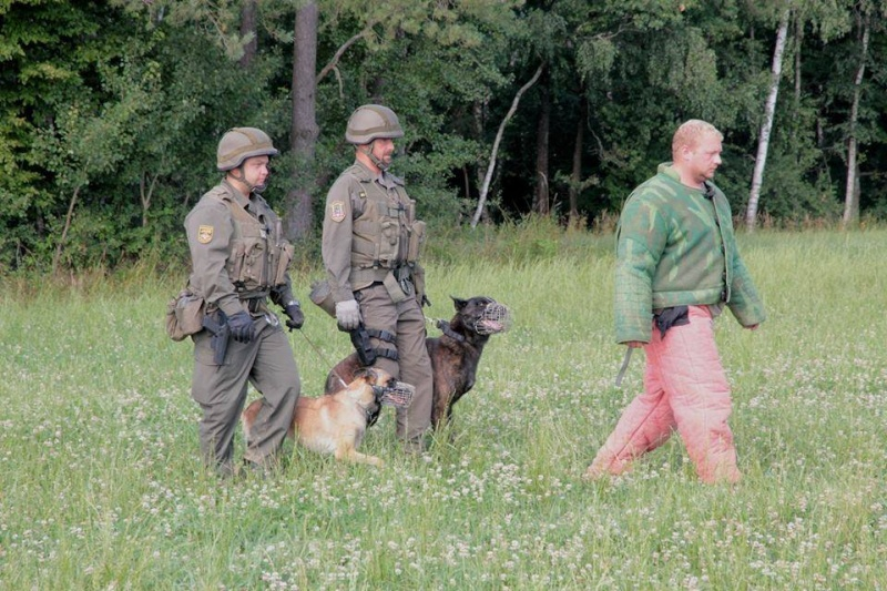 Animaux soldats - Page 5 3114