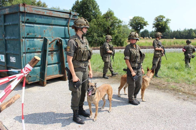 Animaux soldats - Page 5 5110