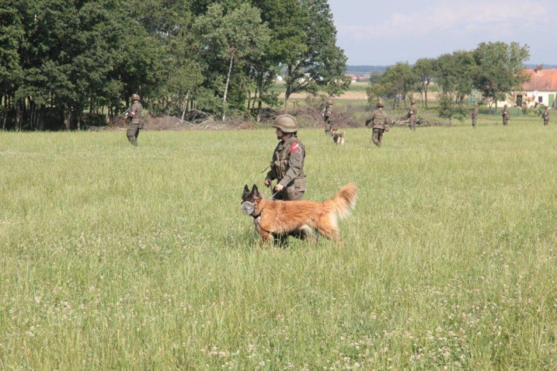 Animaux soldats - Page 5 682